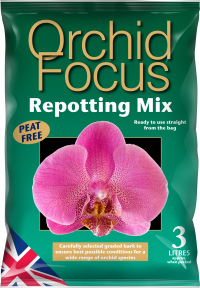 Orchid Focus Medium