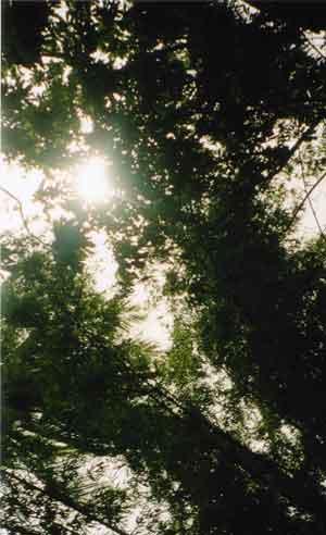 http://www.gavsgrow.com/images/canopylight.jpg